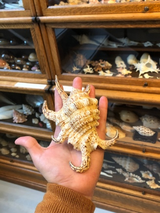 Many of these shells even dead look scary!