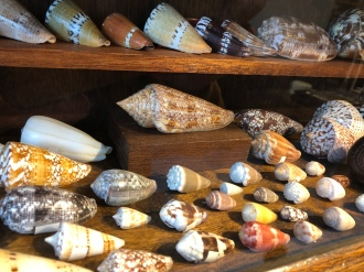 The Cone Snail (in the middle on top of a wooden block) is a poisonous snail that fires deadly harpoons to its preys, also venamous for humas.
