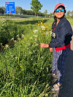 Picking flowers on the way back from Keukenhof